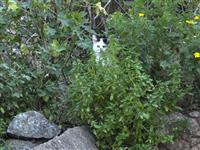 One of the many cats on Hydra